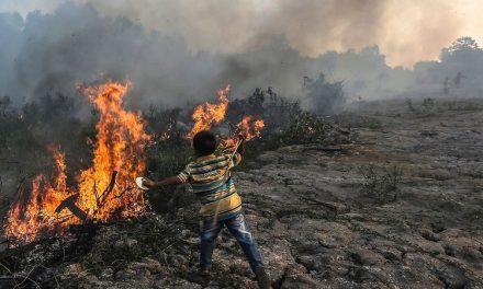 Karhutla Ancam Kelestarian Hutan dan Komitmen Iklim Indonesia