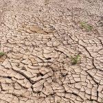 Menanggulangi Degradasi Lahan dan Kekeringan Demi Atasi Krisis Iklim Dunia