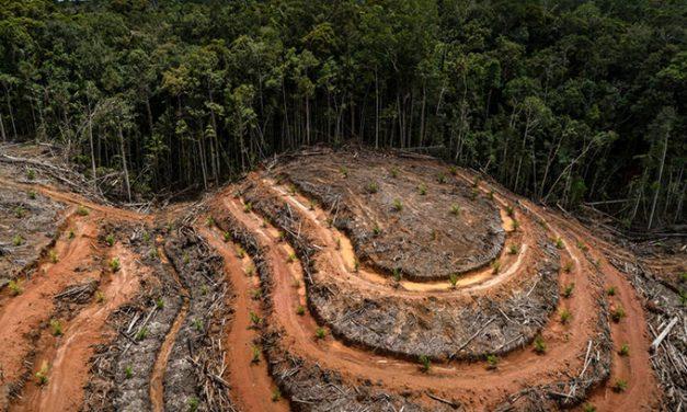 Konsistensi Kebijakan Pemerintah Pengurangan Deforestasi Kunci Pencapaian Komitmen Iklim